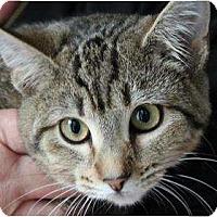 Adopt A Pet :: Sarah - Justin, TX
