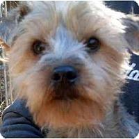 Adopt A Pet :: Boomer - Harrisburg, PA