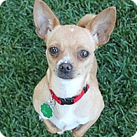 Adopt A Pet :: Stephanie - La Habra Heights, CA