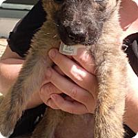 Adopt A Pet :: Zoey - Saskatoon, SK