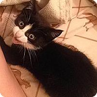 Adopt A Pet :: Jasper - N. Billerica, MA