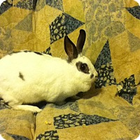 Adopt A Pet :: SNOWFLAKE - Long Valley, NJ