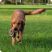 Adopt A Pet :: Karma - Murdock, FL