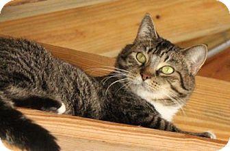 Domestic Mediumhair Cat for adoption in Brunswick, Georgia - Augusta
