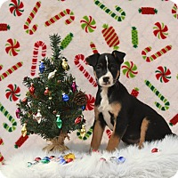 Adopt A Pet :: -Soloman - Charlemont, MA