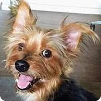 Adopt A Pet :: Alfphie - Phoenix, AZ