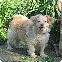 Adopt A Pet :: DAZIE - Bedminster, NJ