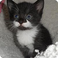Adopt A Pet :: Sydney - Furlong, PA