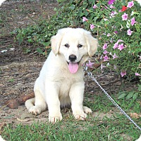 Adopt A Pet :: BAILEE - Bedminster, NJ