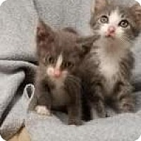 Adopt A Pet :: Danny and Sandra Dee - DuQuoin, IL