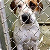 Adopt A Pet :: Megazord - Urgent! - Zanesville, OH