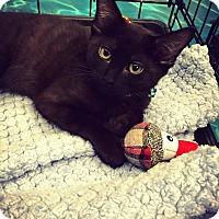 Adopt A Pet :: Buddy - Mansfield, TX