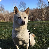 Adopt A Pet :: Serenity - New Milford, CT