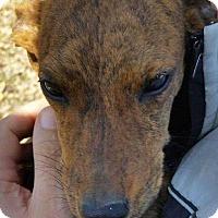 Adopt A Pet :: Tansy - Richmond, KY