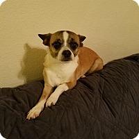 Adopt A Pet :: Kiki - Goodyear, AZ