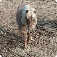 Adopt A Pet :: Arorua - Loudon, TN