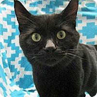 Adopt A Pet :: 17-c02-006 Sylvie - Fayetteville, TN
