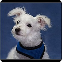 Adopt A Pet :: Jacob - Fort Braff, CA