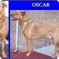 Adopt A Pet :: Oscar - Hamilton, ON
