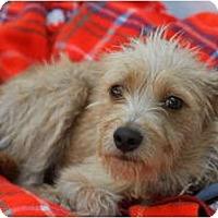 Adopt A Pet :: ROCKET - san diego, CA