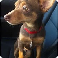 Adopt A Pet :: Benny - Oceanside, CA