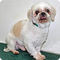Adopt A Pet :: Sammy - Port Washington, NY