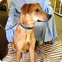 Adopt A Pet :: Stevie in CT - Manchester, CT