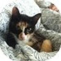 Adopt A Pet :: Felomeno - Vancouver, BC