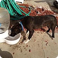 Adopt A Pet :: Elliott - Cranston, RI