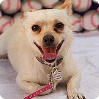 Adopt A Pet :: Tick Tack - Redondo Beach, CA
