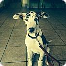 Adopt A Pet :: Tanner