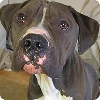 Adopt A Pet :: Raisin - Kansas City, MO