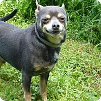 Adopt A Pet :: Ozzie - Wyanet, IL