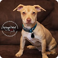Adopt A Pet :: THE ROCK - Higley, AZ