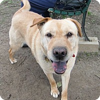 Adopt A Pet :: Selma  -Courtesy - Richmond, VA