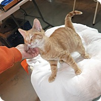 Adopt A Pet :: Scotty - Geneseo, IL