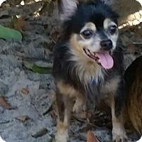 Adopt A Pet :: Max - Weeki Wachee, FL