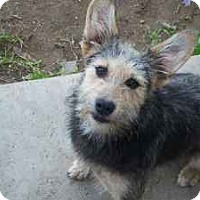 Adopt A Pet :: Dixie - San Francisco, CA