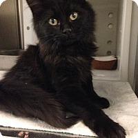 Adopt A Pet :: Betty Crocker - Gainesville, FL