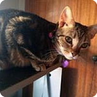Adopt A Pet :: Mischief Molly - Mission Viejo, CA