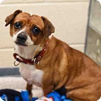 Adopt A Pet :: DIAMOND - Pittsburgh, PA