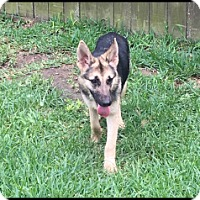 Adopt A Pet :: Marlena - Houston, TX