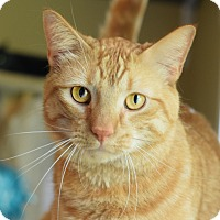 Adopt A Pet :: Garfield - Carencro, LA