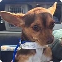 Adopt A Pet :: Reggie - Las Vegas, NV