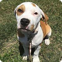 Adopt A Pet :: Tupac AKA 2Pac - Detroit, MI