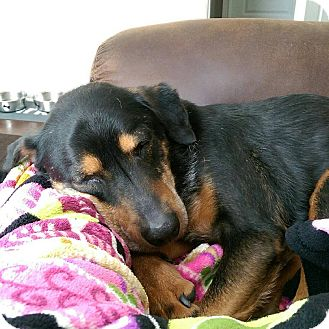 Terrier (Unknown Type, Small) Mix Dog for adoption in Prospect,, Kentucky - Otto