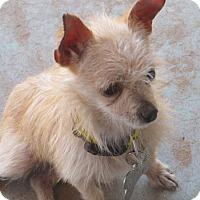 Adopt A Pet :: Rico - El Paso, TX