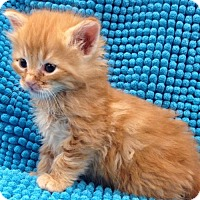 Adopt A Pet :: PENNY - Lakewood, CA