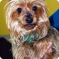 Adopt A Pet :: Razzie - Bradenton, FL