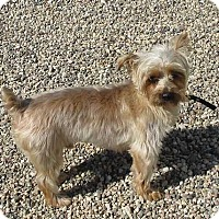 Adopt A Pet :: Jessie - Clear Lake, IA